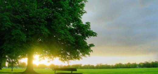 alam-hijau